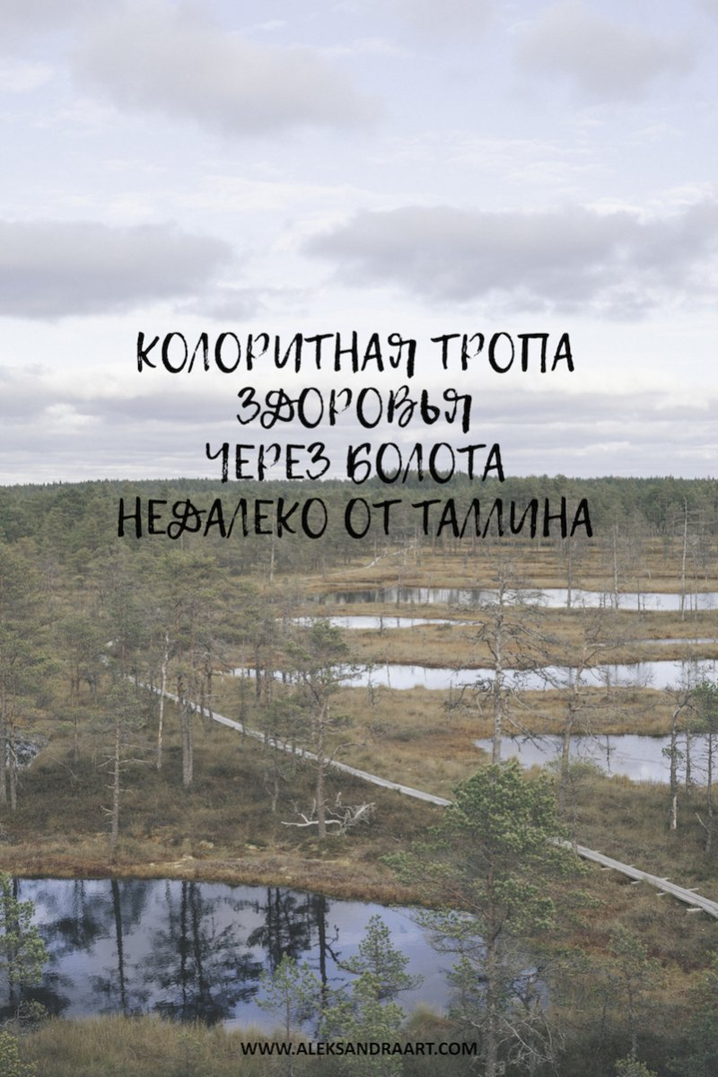aleksandraart.com | КОЛОРИТНАЯ ТРОПА ЗДОРОВЬЯ ЧЕРЕЗ БОЛОТА НЕДАЛЕКО ОТ ТАЛЛИНА