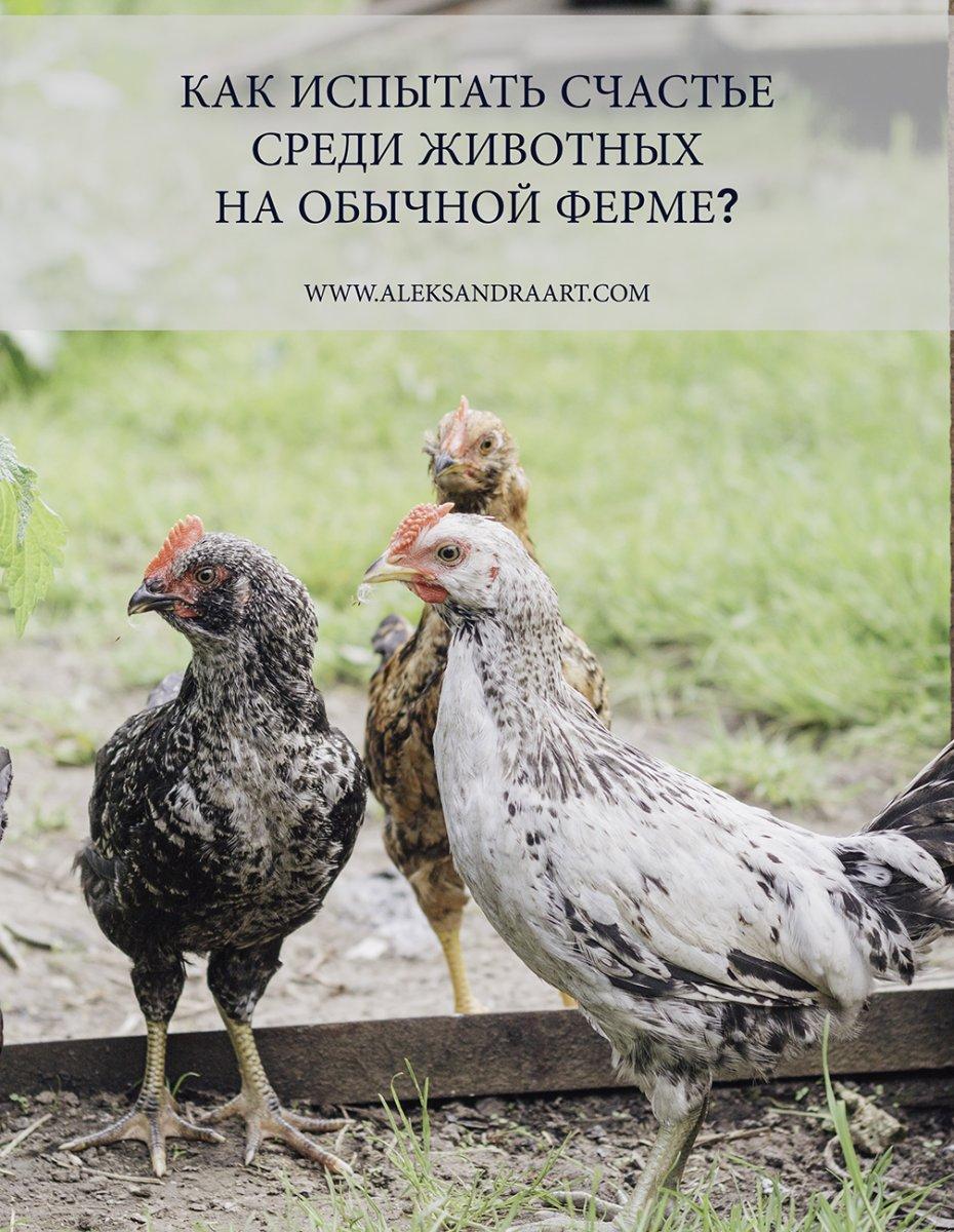 КАК ИСПЫТАТЬ СЧАСТЬЕ СРЕДИ ЖИВОТНЫХ НА ОБЫЧНОЙ ФЕРМЕ? | aleksandraart.com