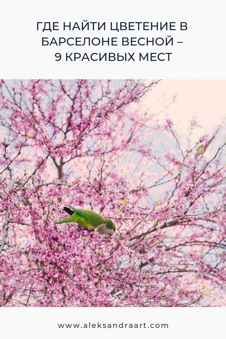 БАРСЕЛОНА ВЕСНОЙ. ЦВЕТЕНИЕ ГЛИЦИНИИ - 9 КРАСИВЫХ МЕСТ | aleksandraart.com