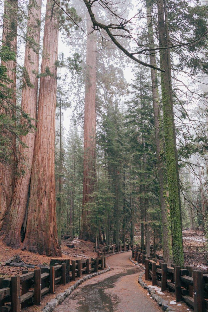 САМАЯ БОЛЬШАЯ СЕКВОЙЯ В МИРЕ - GENERAL SHERMAN TREE