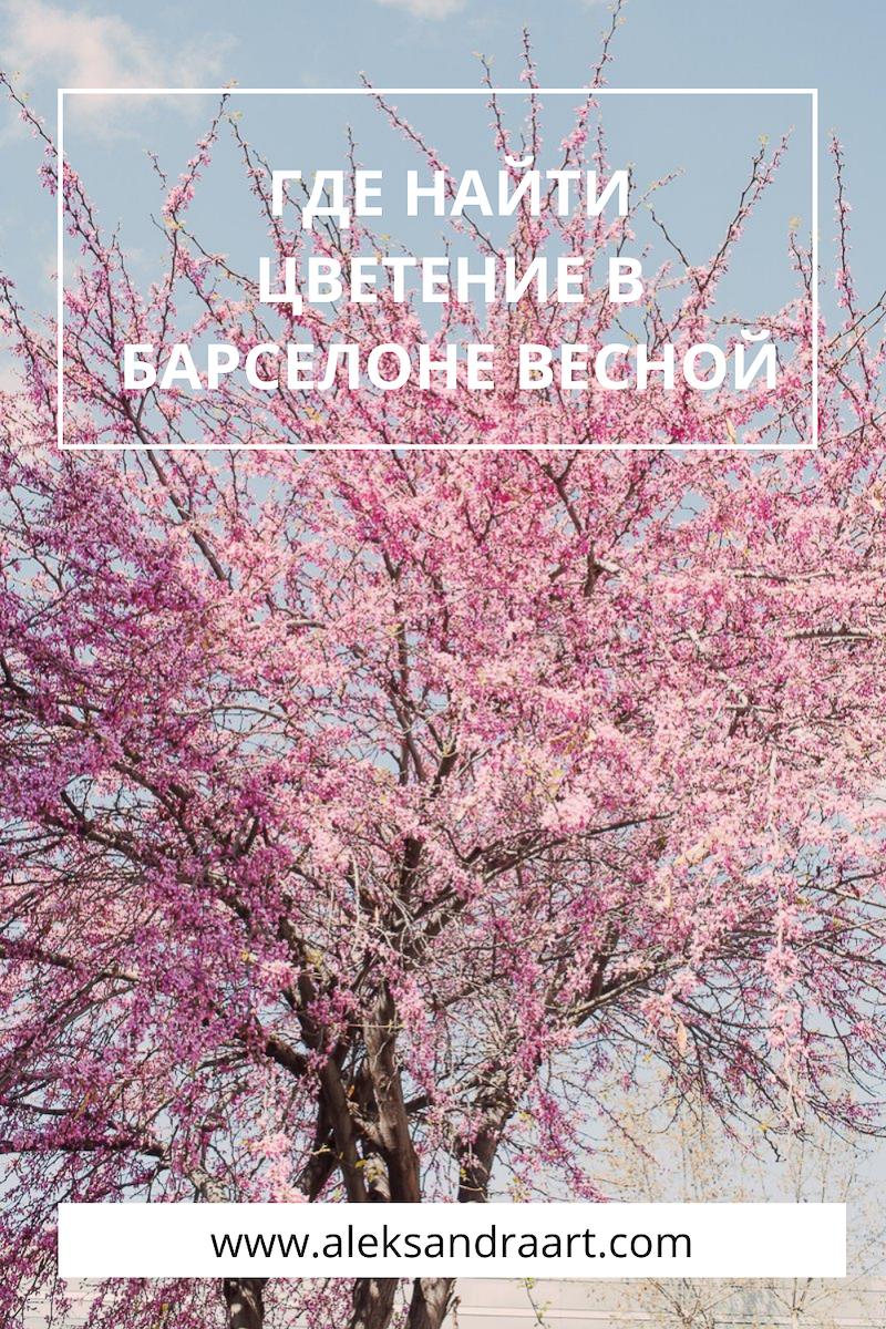 ЦВЕТЕНИЕ В БАРСЕЛОНЕ. 9 КРАСИВЫХ МЕСТ