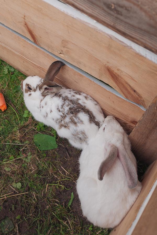 ферма кроликов сааремаа